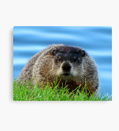 WOODCHUCK  Canvas Print