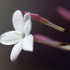 Floral Softness by John Murray