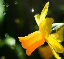 Flower in the Rain by wavygravy