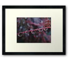Purple stem Framed Print
