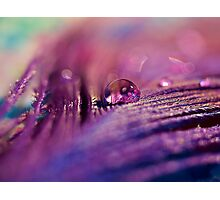 Purple Dream Photographic Print
