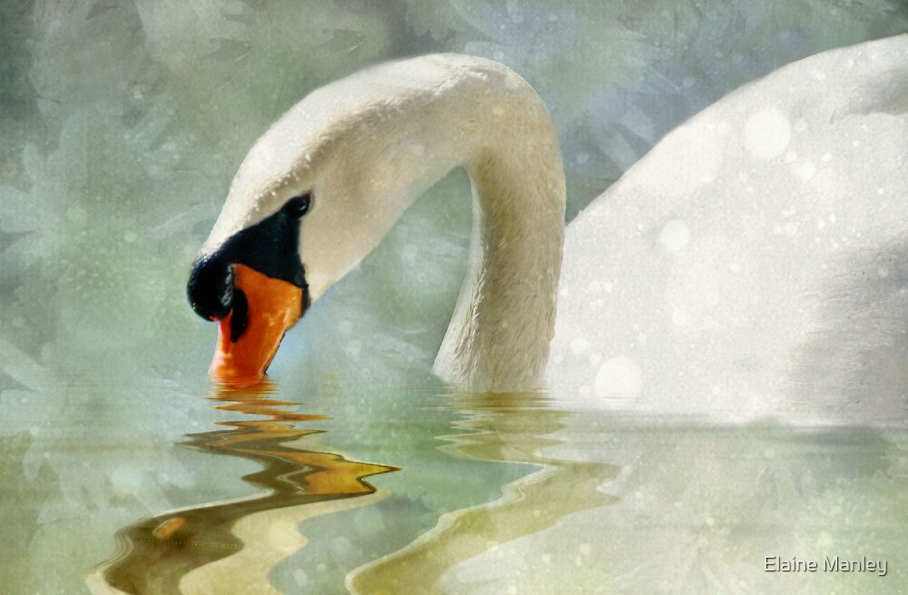 TheSwan by Elaine  Manley