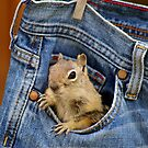 Pocket Full of Chippy by Betsy  Seeton