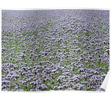 Blue field forever Poster