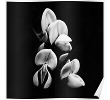 A monochrome Flower World : Broom Poster