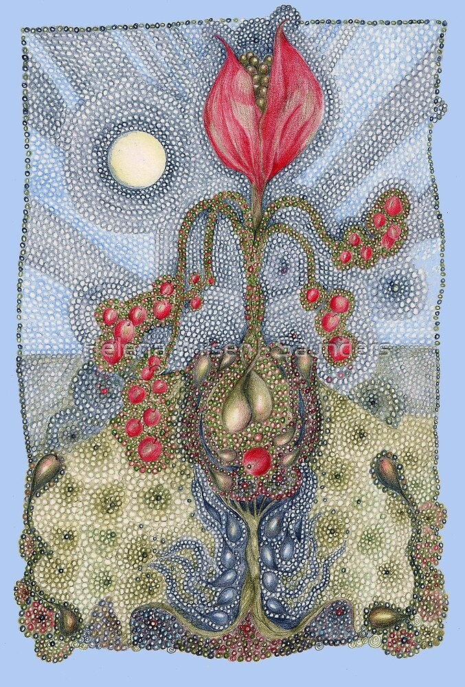 Floribunda Lachrymosa by Helena Wilsen - Saunders