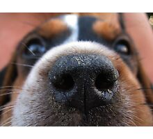 Nose to nose Photographic Print