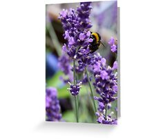 Summer Bumble Bee 3 Greeting Card