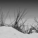 sand and bushes by fabio piretti