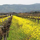 Napa Valley Grape Vineyard  by Missy Yoder