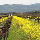 Napa Valley Grape Vineyard  by Missy Yoder