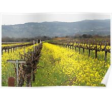 Napa Valley Grape Vineyard  Poster