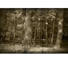 Into The Trees Photographic Print