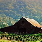 Barn in the Mountians by Colleen Rohrbaugh