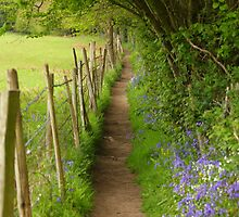 Country path with bluebells by RFK C