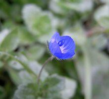 tiny blue by Floralynne