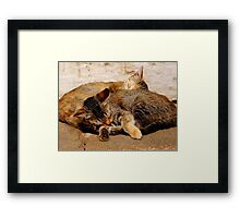 Twin Kittens Framed Print