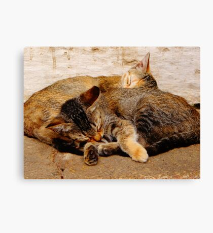 Twin Kittens Canvas Print