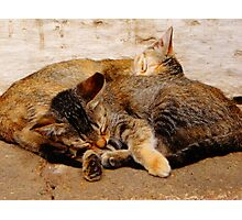 Twin Kittens Photographic Print