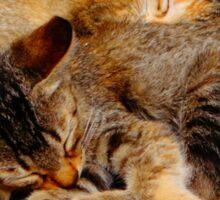 Twin Kittens Sticker