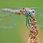 Bug Eyes by Jessica Dzupina