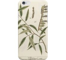 A curious herbal Elisabeth Blackwell John Norse Samuel Harding 1739 0194 The Willow Tree iPhone Case/Skin