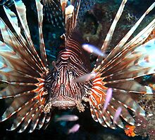 Caribbean Lion Fish guarding the Coral Reef by Amy McDaniel