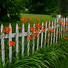 White picket fence by Brent McMurry