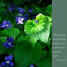 Violets with Zen Proverb by Heidi Hermes