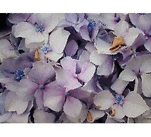 Hydrangeas in tiles  Photographic Print