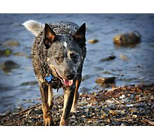 Leash-free at the Lake Photographic Print
