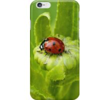 Macro Ladybug on Garden Plant iPhone Case/Skin