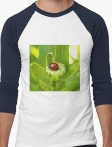 Macro Ladybug on Garden Plant Men's Baseball ¾ T-Shirt