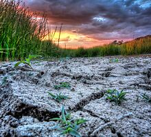 Ground Level Sunset by Bob Larson