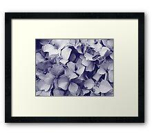 Hydrangeas in crayon  Framed Print