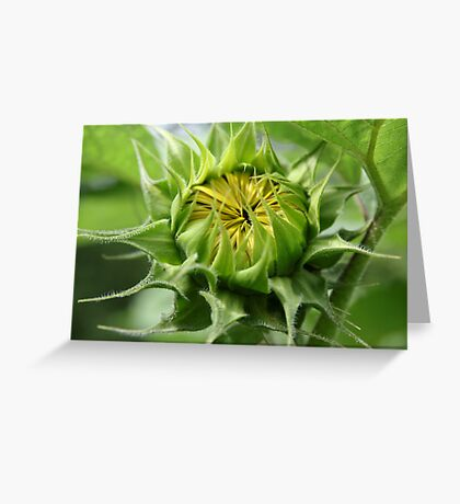 Ready To Pop Greeting Card