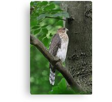 Quietly Perched Canvas Print