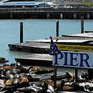 Pier 39 Harbor Seals by LGLProduction