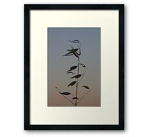 The summer wind Framed Print