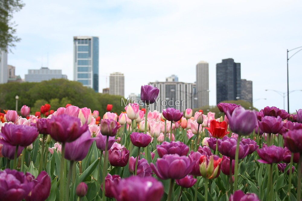 Tulips in Spring with the city of Chicago in the background. by Missy Yoder