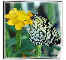 Paper Kite Buterfly Poster