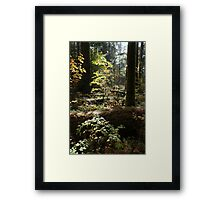 Cathedral Grove, Vancouver Island Framed Print