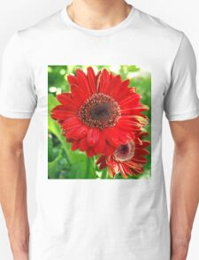 Giant Red Gerber Daisy Flower in the Garden T-Shirt