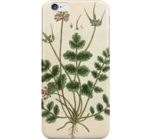 A curious herbal Elisabeth Blackwell John Norse Samuel Harding 1737 0384 Musk Crane's Bill iPhone Case/Skin
