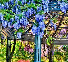 Duke Gardens Study 4 by Debbie Lucas
