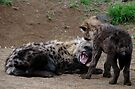 Back off buster! by Explorations Africa Dan MacKenzie