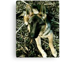 german shephard Canvas Print