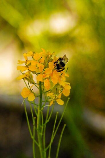 Bees and Bokeh by John  De Bord Photography