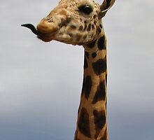 Giraffe by Brian Addison