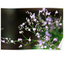 Fragile Purple Blooms  Poster